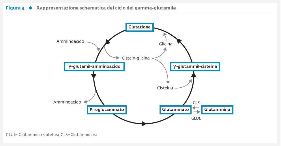 Fattori genetici coinvolti nello sviluppo delle complicanze cardiovascolari del diabete