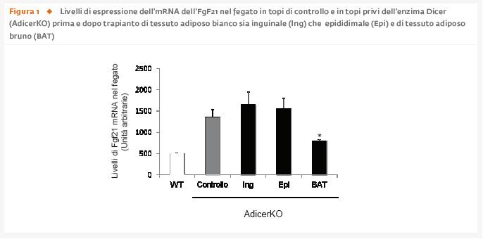 I miRNA circolanti prodotti dal tessuto adiposo regolano l'espressione genica in altri tessuti